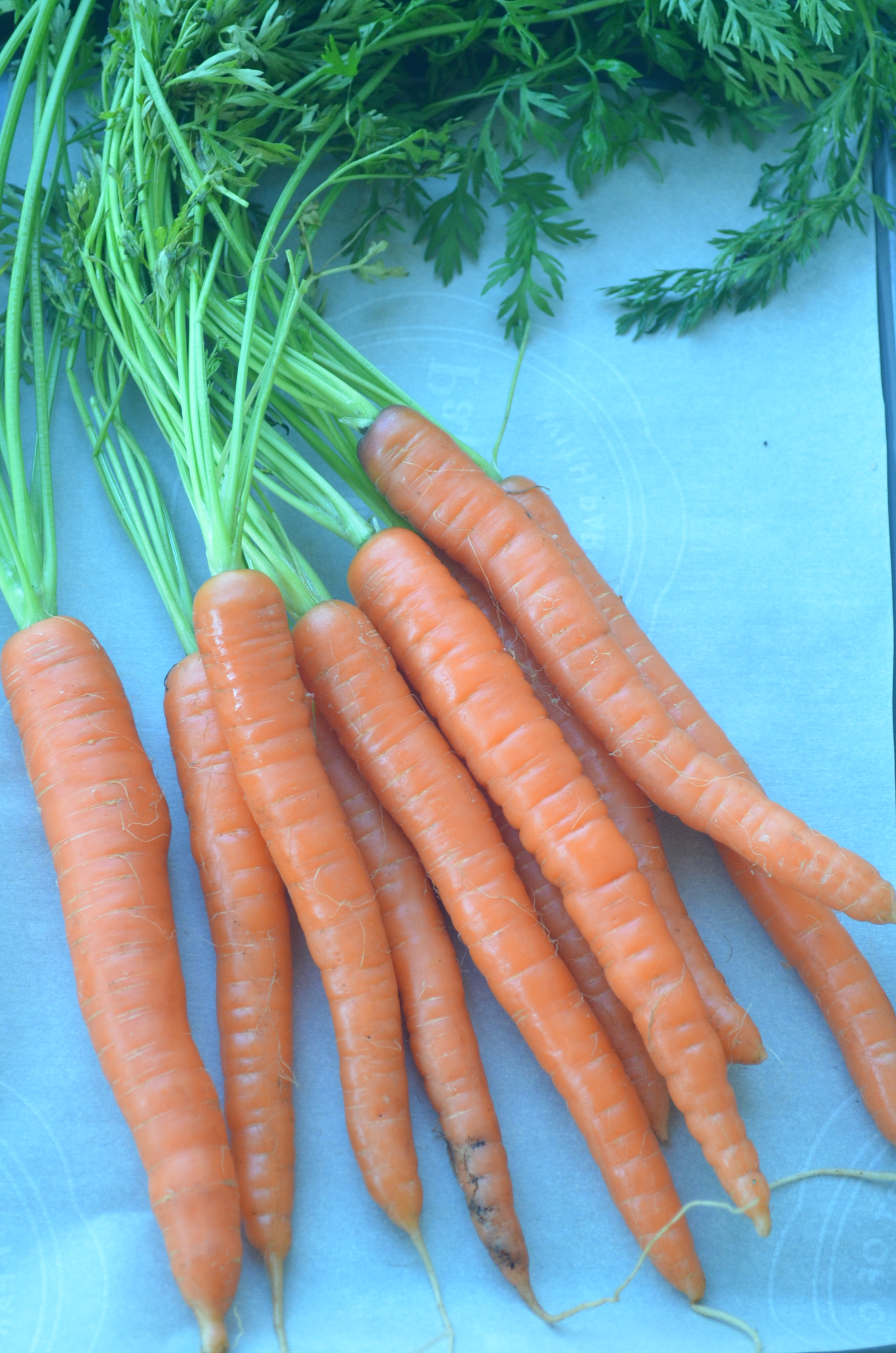 Small Batch Roasted Baby Carrots with Tzatziki Dressing