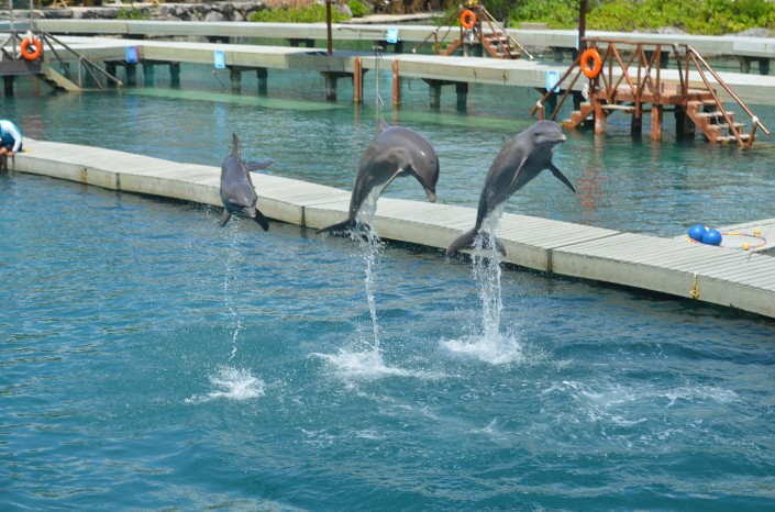 Dolphinarium at Xcaret Mexico