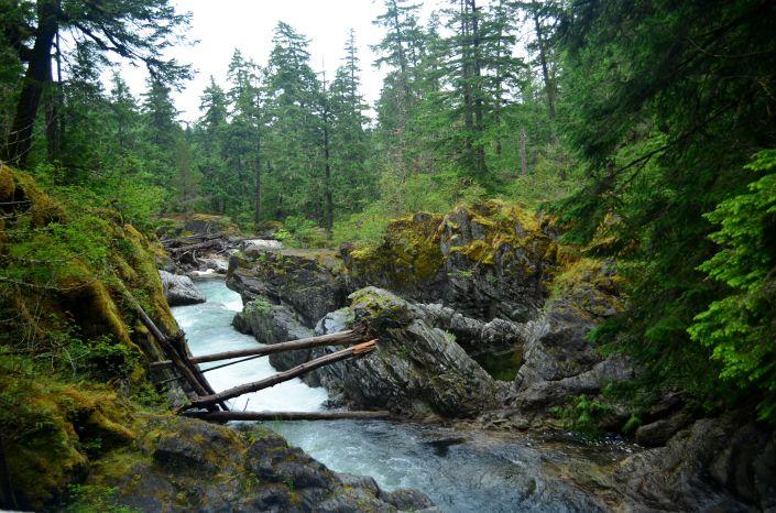 Mac Millan Provincial Park Tofino