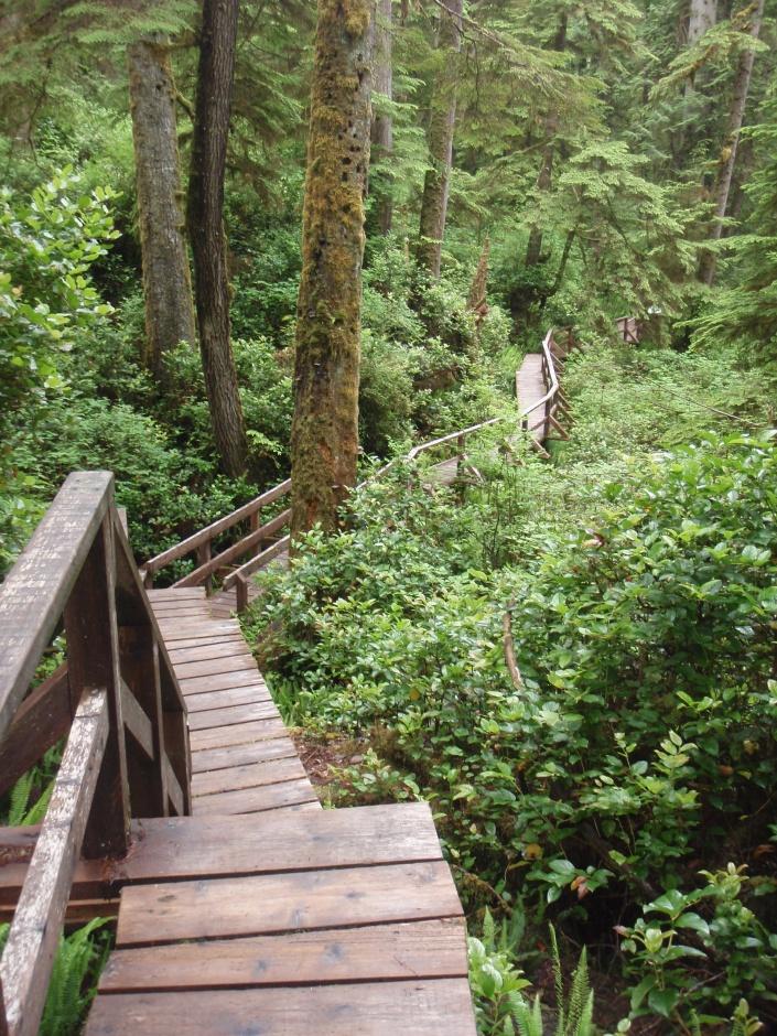 Rainforrest Trail Tofino BC