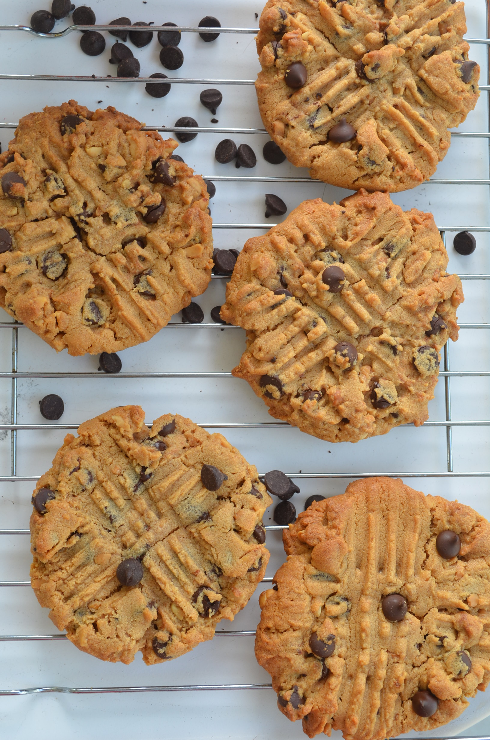 Peanut Butter Chocolate Chip Cookie at SweetNSpicyLiving.com