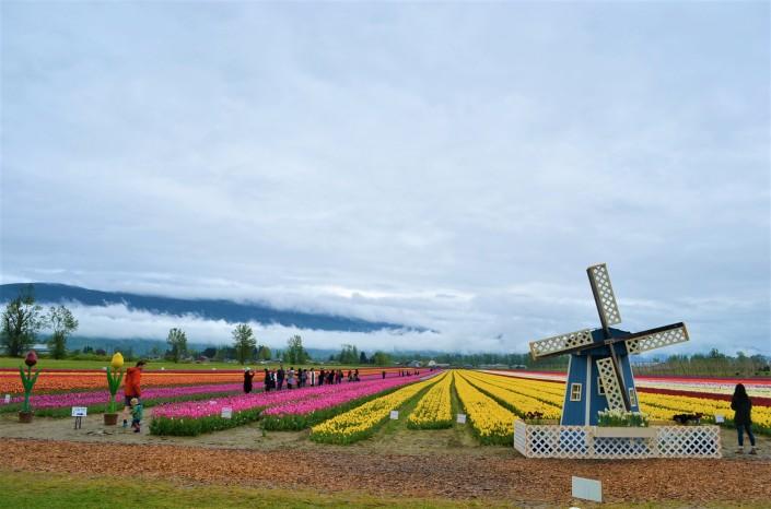 Fraser Valley Tulip Festival
