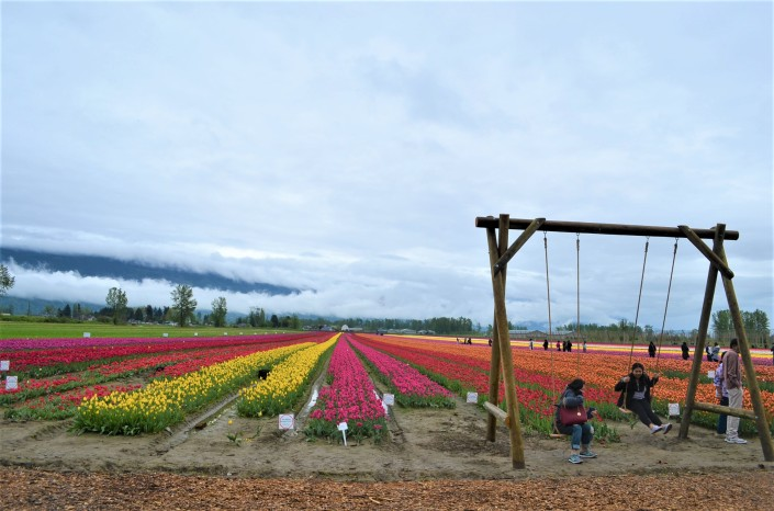 Tulip Festival in Chilliwack BC Bristish Columbia