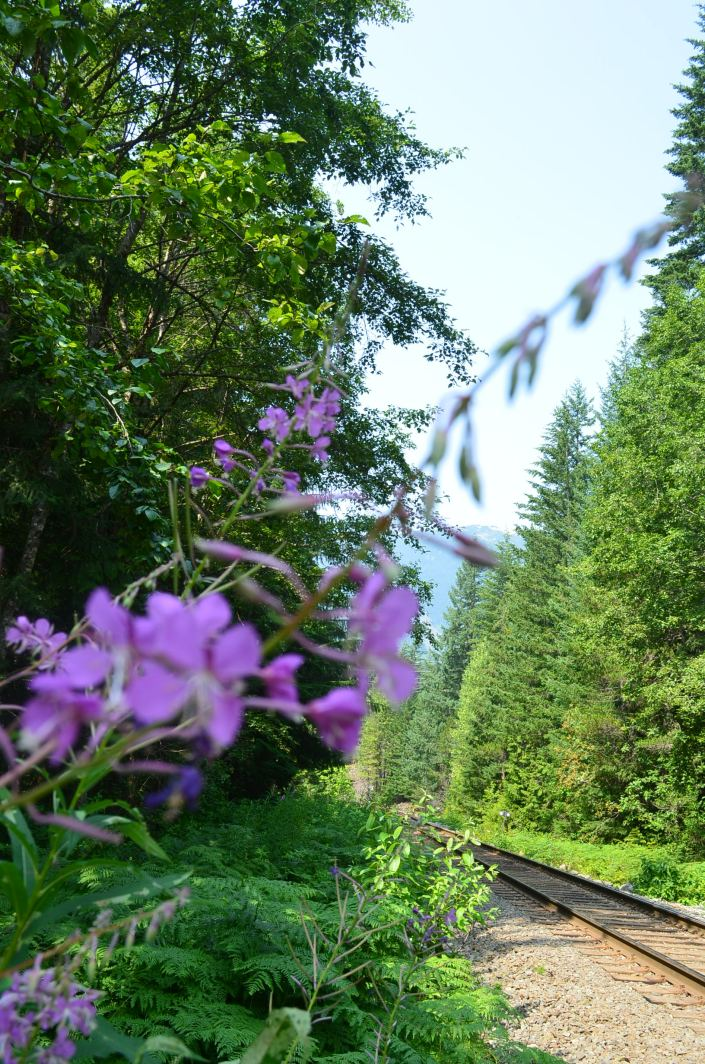 BrandywineFall Provincial Park Hike