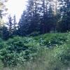 Sky Line Trail GrouseMountain