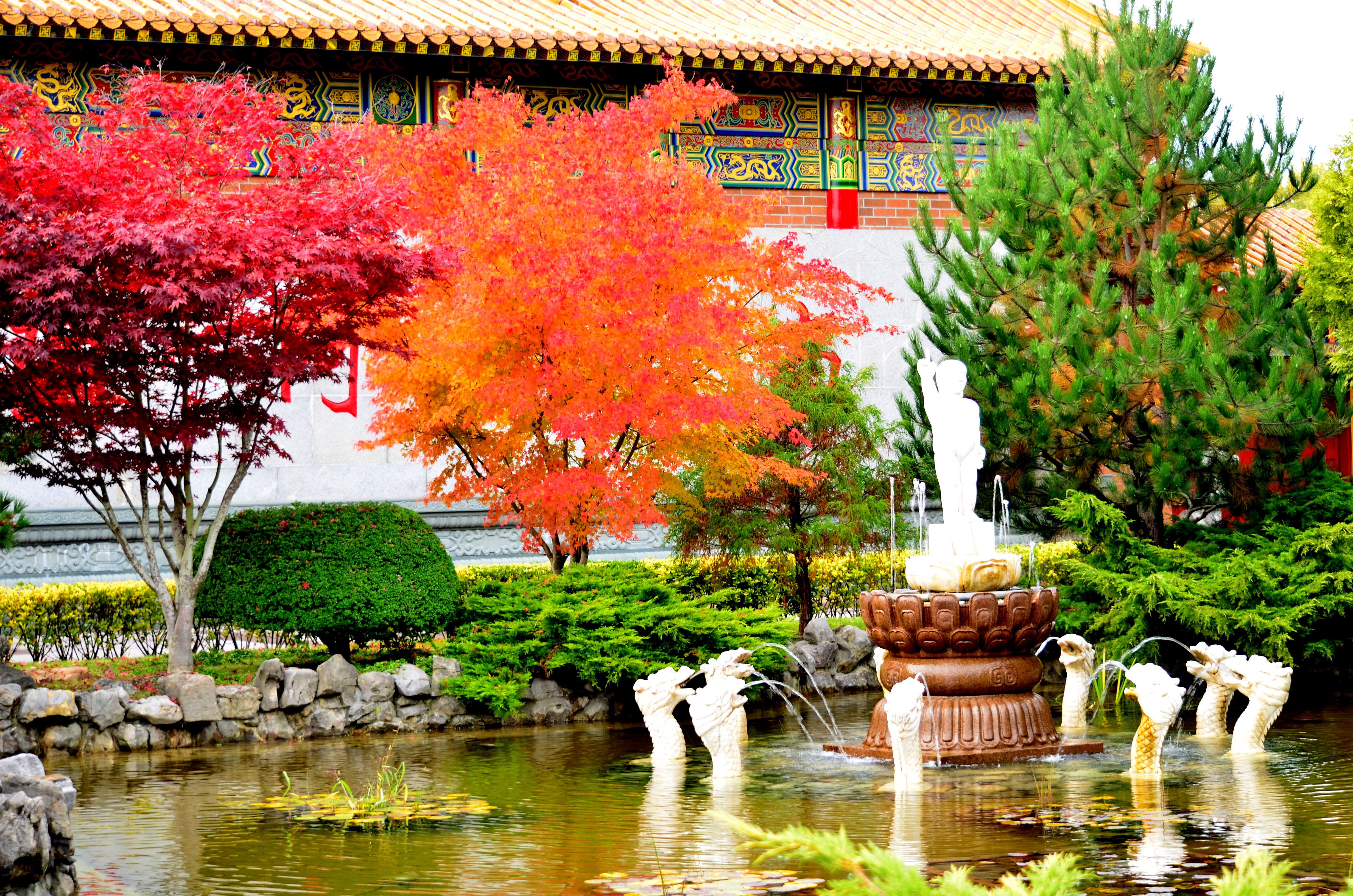 Fall at Chinese Temple Richmond BC