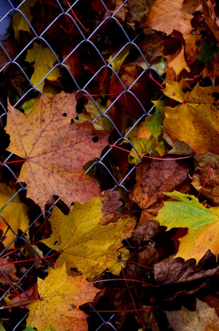 Fall i Vancouver