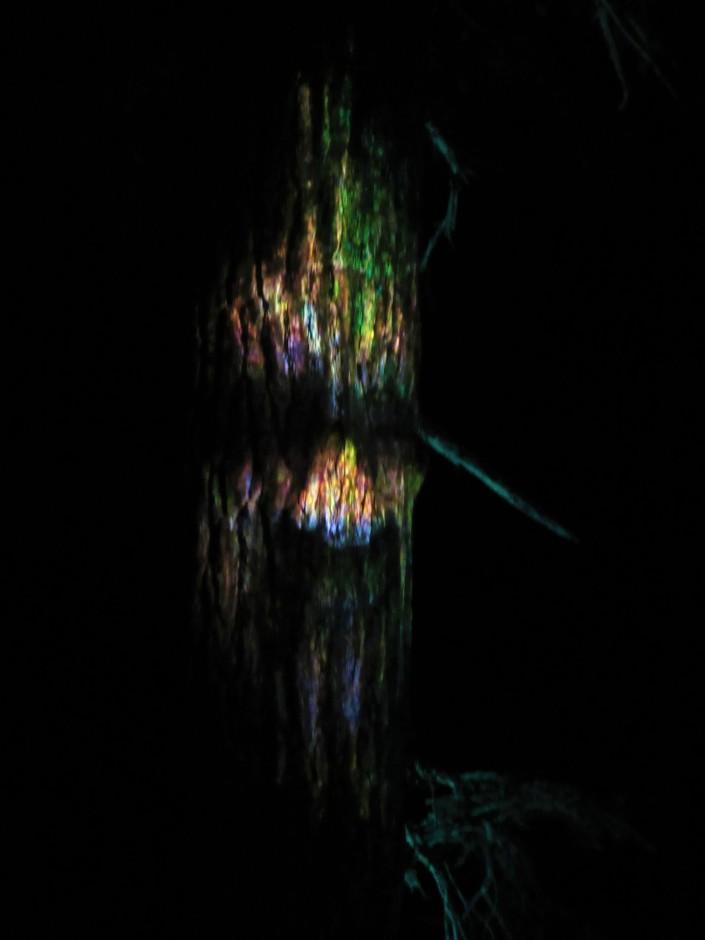 Vallea Lumina Talking Trees