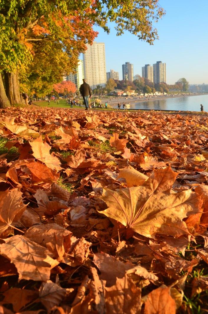 Vancouver BC Fall