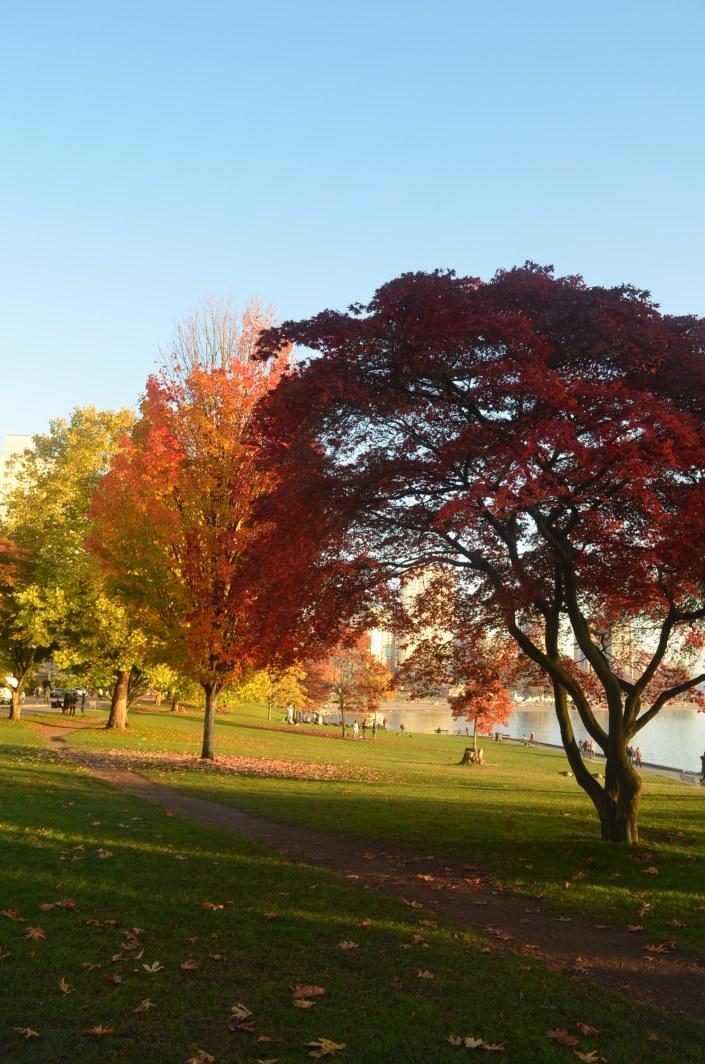 Vancouver Fall