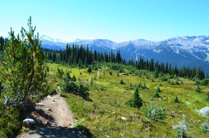 Alphine Hiking Blackcomb