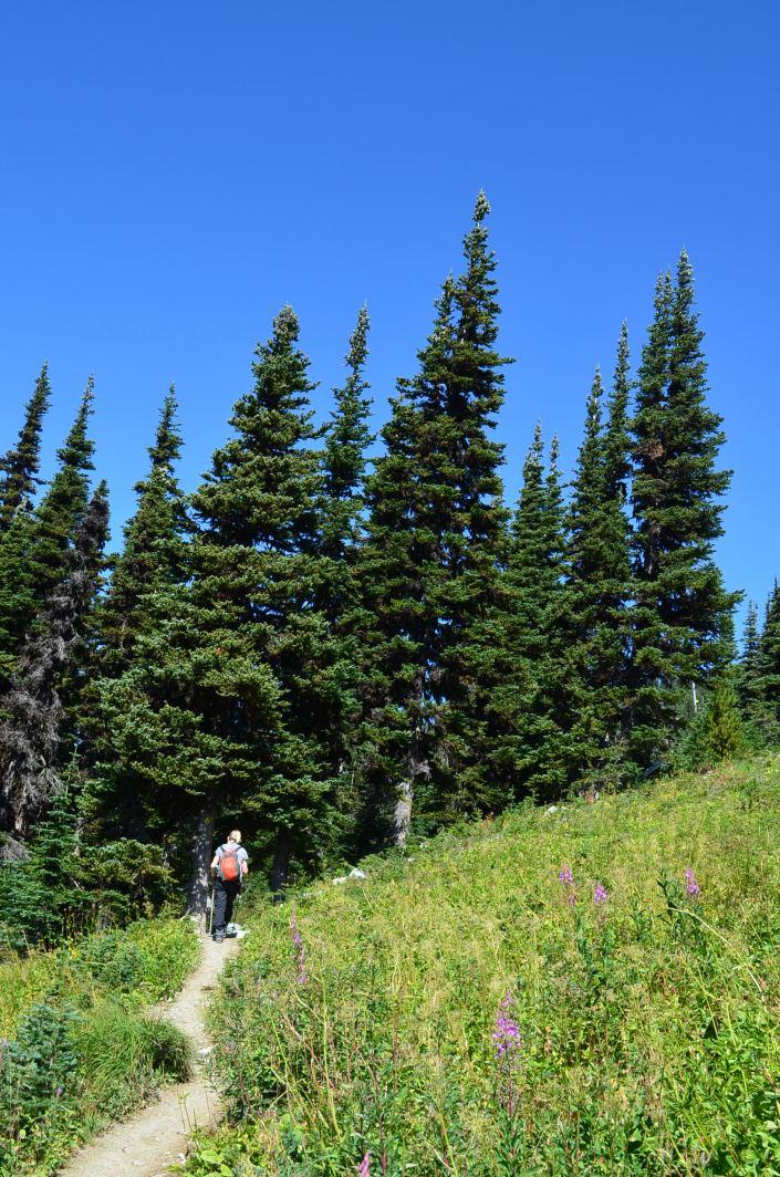 Whistler Hiking Alpine Hike