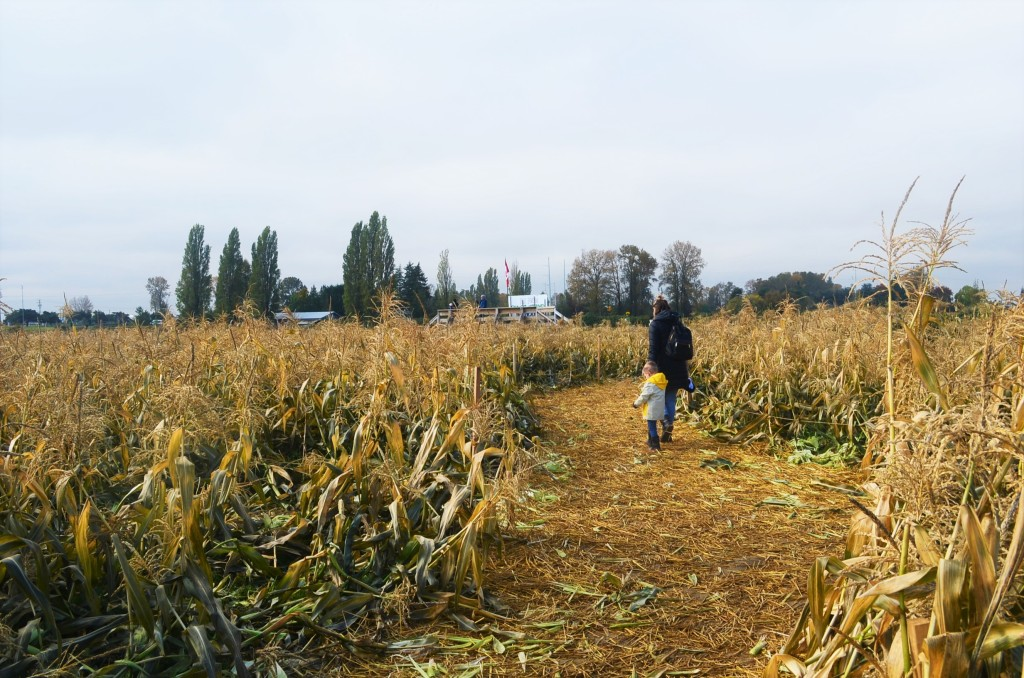 Corn Maze at the Pumpkin Patch in Richmond BC