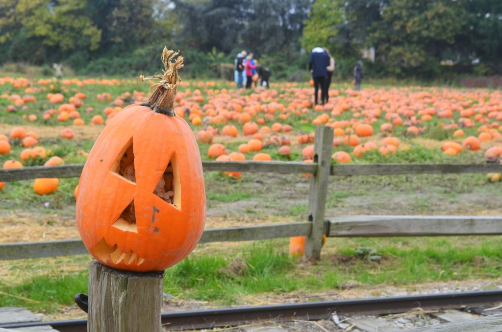 Pumpkin Patch at Richmond BC