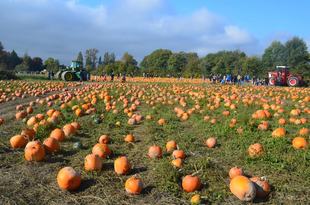 Pumpkin Patch in Richmond BC