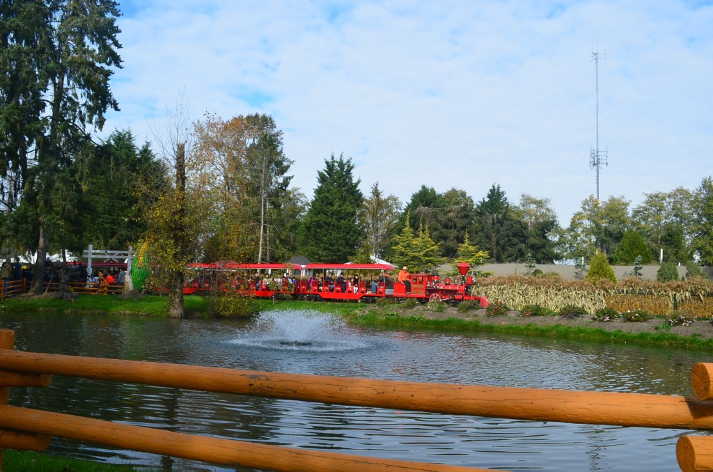 Miniature Train ride at the Pumpkin Patch in Richmond BC