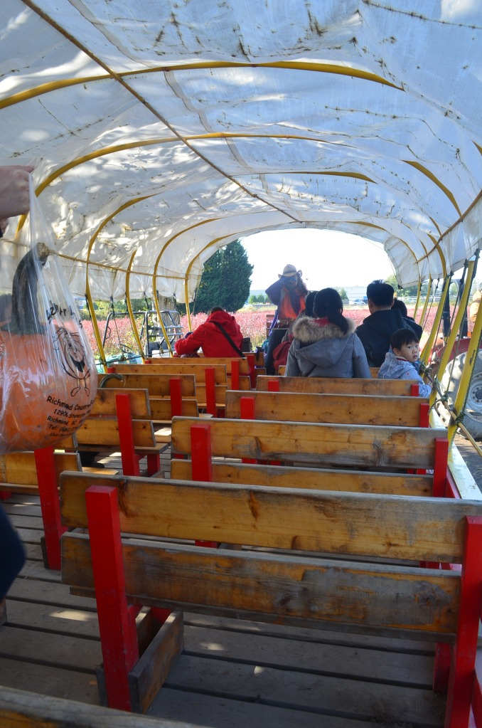 Wagon Ride The Potato to the Pumpkin Patch in Richmond BC